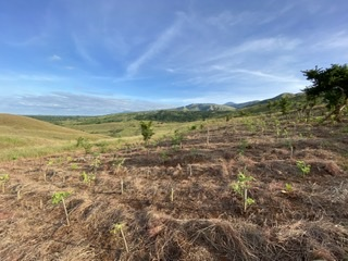 Globe And Partners Double Up Reforestation, CO2 Reduction Efforts