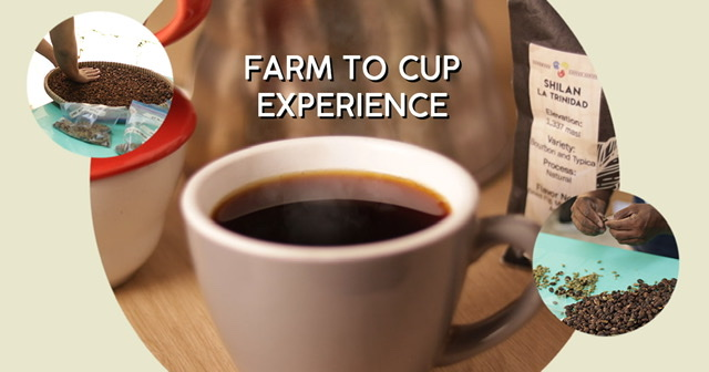 Heart, Soul, and Passion: Curve Coffee Collaborators Is Brewing a New Age of Coffee
